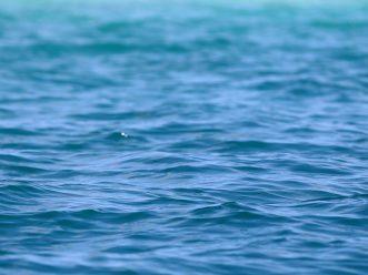 Les bleus de l'océan